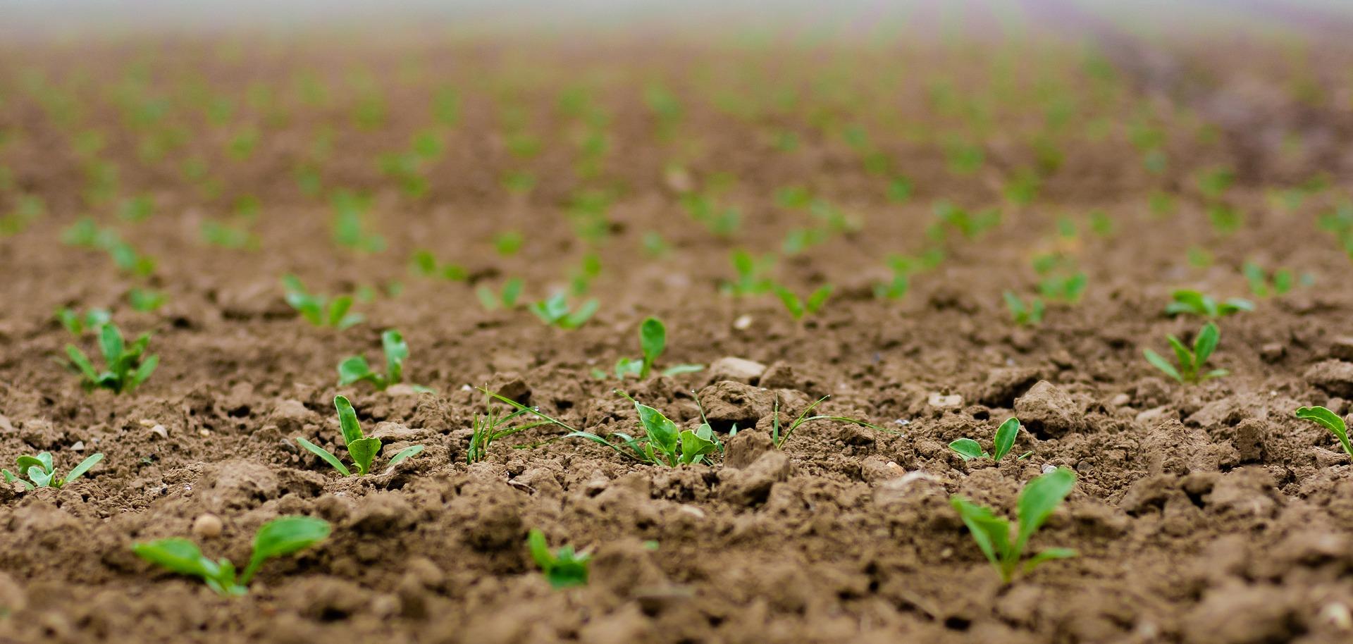 seedlings-4186033_1920